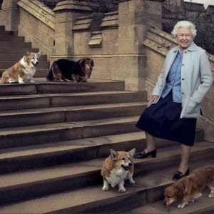The Queen and her dogs